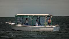 Dolphin Watchers (emptyseas) Tags: usa west port keys island nikon key florida dolphin watch wilson straits d800 eo emptyseas