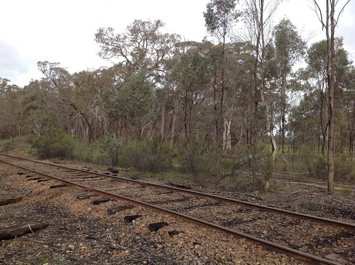 Victoria Goldfields railway, near Maldon
