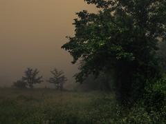 Diving into Dark Fog (Netsrak) Tags: trees mist tree green nature grass fog forest de deutschland haze woods nebel natur meadow wiese gras grün wald bäume baum nordrheinwestfalen dunst rheinbach forst