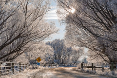 Patearoa Maniototo Road (Maree A Reveley Photography) Tags: 2016 canonef24105mmf3556isstm canoneos6d centralotago frost gimmerburn hoarfrost july landscape maniototo mareeareveleyphotography newzealand otago ranfurly road southisland winter patearoa nz serene surreal cold ice rural white fog mareeareveley