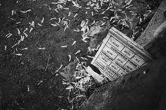 untitled (Anton Zabermach) Tags: blackandwhite bw film analog 35mm dof nikkor ilford fp4 nikonfe2 selfdeveloped microphen 50mmf18ai