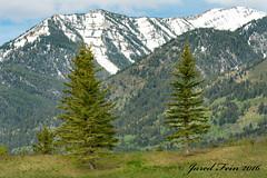 Two Pines (SewerDoc (2 million views)) Tags: grandtetonnationalpark wyoming