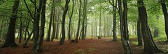 Into the Woods (mgreiersen) Tags: mist wood green germany morning outdoor
