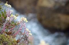 Big Sur (Williams5603) Tags: bigsur cliffs lobos point pointlobos california carmel