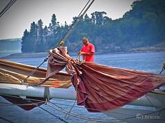 Trimming the Sails (The Bop) Tags: sailboat sails sea island harbor trimming sailor tshirt orange mast dockbay