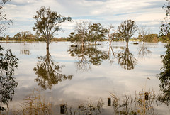 Longford Wetlands (laurie.g.w) Tags: longford wetlands east gippsland victoria lake flooded reflections mirror trees sky