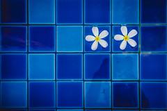 Two on Blue (aotaro) Tags: fe55mmf18za pool waterpool flowers india chennai two ilce7m2 chennaihilton