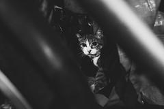 DSCF1115 (StagnantLife & Bearangel) Tags: nagoya  central park tower cat japan xpro2
