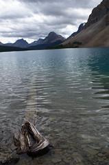 DSC_6222 (AmitShah) Tags: banff canada nationalpark