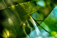 Multiple Nature 341 (pni) Tags: leaf twig vein dof blur focus multiexposure multipleexposure tripleexposure helsinki helsingfors finland suomi pekkanikrus skrubu pni tlnlahti tlviken
