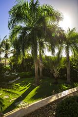 Punta Cana (katarzynarusilowicz) Tags: puntacana casa canon canonphotography palmtrees travel skyporn vacation villa dominicanrepublic exotic caribbeansea paradise beautifuldestinations nature