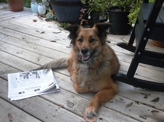 Hannah Belle (Just Back) Tags: camera autumn love sc dogs smile face comfortable mouth hair fur mammal happy see newspaper mutt girlfriend view know teeth tail journal ears canine columbia vision times sweetheart paws embrace companion beloved nyt snout zeitung