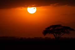 Kenya Oct 14 (PIX SW) Tags: sunset cloud tree kilimanjaro buffalo skies kenya crane wildlife lion pelican safari rhino kingfisher zebra cheetah giraffe elephants baboon vulture hoopoe topi fisheagle amboseli masaimara lakenaivasha llkenaivash