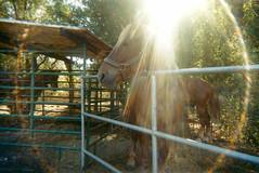 Greenhorn Ranch, Quincy, CA (emilykneeter) Tags: ranch film colorful 2000 disposable greenhorn greenhornranch vsco