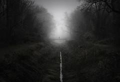 Urban Wilderness (@hipydeus) Tags: autumn mist fog munich münchen nebel jungle isar lowkey