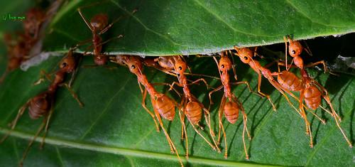 Ant unity !