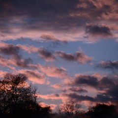 Paint the Sky (flashfix) Tags: pink blue trees sky ontario canada nature clouds nikon purple framed ottawa mother silhouettes treetops textures squareformat 2014 d7000 naturestextures nikond7000 55mm300mm 2014inphotos november182014