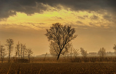 At the end of autumn (Fil.ippo) Tags: autumn landscape albero hdr filippo paesaggio lonelytree povalley pianurapadana d7000 filippobianchi