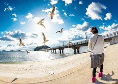 Sony a7 | DSC05608  ( fisheye against the sun seagull hdr) (tea81p) Tags: sun animal japan gull sony picture sigma fisheye  backlit   15mm f28 hdr a7 takeshima gamagori nex   7   sigma15mmf28exdgdiagonalfisheye facingthesun seagulla   alphaa7 ilce7 teaflphoto