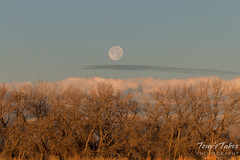 Moonset at the Rocky Mountain Arsenal