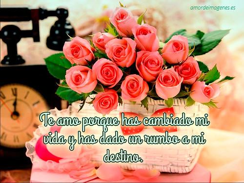Flores Hermosas Con Frases De Amor Para Tu Pareja A Photo On