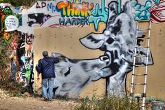 G is for.... (BeachBumBlu) Tags: streetart art austin graffiti artist texas spraypaint giraffe castlehill freshstart tonemapping 3365 cy365 hopeoutdoorgallery orwhetherthisworldisfullofrealpies i3giraffes