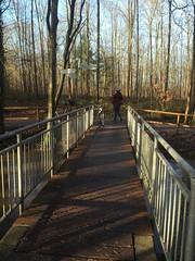 IMG_1339 (maa) Tags: bach radtour brucke baume weiherwald hertelgraben
