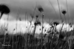 mi manca certo un po' di terra e di sicuro non  solo quella per  io il vento ce l'ho  che mi soffia nei capelli che mi nutre di risposte io il vento ce l'ho (hanabeldir [anna dir]) Tags: abstract surreal icm mosso intentionalcameramovement