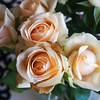 roses (AS500) Tags: roses flower rose peach