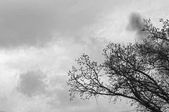 Up Against the Sky (joeldinda) Tags: sky cloud tree home nikon branch village michigan may mulliken 3120 d300 2016 nikond300