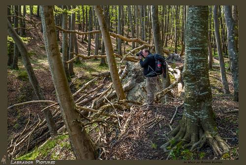 Im Wald auf den Klippen