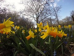 Spring (Pablo_Bpk) Tags: life nyc trip flowers nature good centralpark gopro
