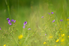 Summer (clara.tardis) Tags: flowers nature md minolta sony 28 f3 135mm nex rokkor
