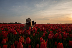 Photography has nothing to do with cameras... (CarolienCadoni..) Tags: camera sunset sky sun netherlands hat clouds photography dof sundown tulips bokeh sony nederland groningen backshot tulipfields uithuizermeeden sal2470z sonyslta99