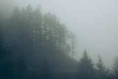 2016.05.21: WABDR Leg 1 (Danielle Bednarczyk) Tags: travel trees pinetree pine forest drive washington woods jeep offroad 4x4 wanderlust adventure trail evergreen toyota wa offroading overland evergreenforest nwol overlanding wabdr washingtonbackcountrydiscoveryroute northwestoverland