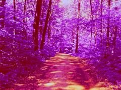 nightingale park (Dr. Alex O Chevtchenko) Tags: film kodak hasselblad infrared 60mm 6x45 e6 carlzeiss orangefilter aerochrome 205tcc