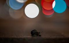 Street Snail in the Night (::nicolas ferrand simonnot::) Tags: blue light red orange white paris colors up field yellow vintage wow lens prime aperture close purple bokeh 85mm 15 mount m42 1992 zenit manual russian depth f28 blades | jupiter9 2016 preset зенит ƒ2 lzos юпитер9