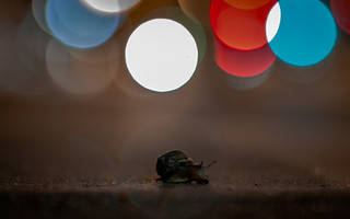 Street Snail in the Night