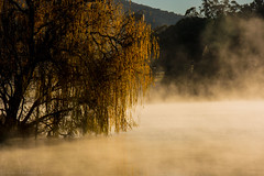 Lake Burley Griffin, Canberra, Australia (Theresa Hall (teniche)) Tags: mist reflection fog landscape australia canberra morningmist lakeburleygriffin canberraaustralia