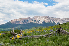 Happy Fence Friday! (Squirrel Girl cbk) Tags: june fence colorado explore wildflowers sanjuanmountains 2016 hff