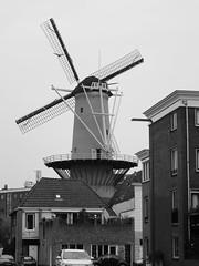SCHIEDAM (NL) 2016 (streamer020nl) Tags: holland mill netherlands nederland paysbas niederlande schiedam noord zuidholland 2016 stellingmolen korenmolen noordmolen llh noordvest 010616 louiselh