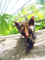 Cats Edition 7 - (29) (Robert Krstevski) Tags: pet cats pets black cute nature animal cat photography eyes kitten little outdoor kitty kittens macedonia kitties cuteness photooftheday robertkrstevski catsedition7