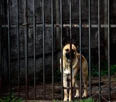 Encadenado (pablodonoso92) Tags: perro dog cadenas hierro fierro casa home