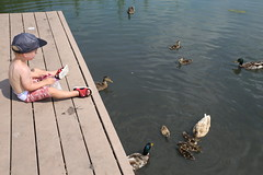 Happy Boy, Happy Ducks! (C. VanHook (vanhookc)) Tags: civicpark altoonaiowa