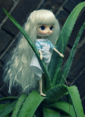 Opal Aloe (Ceci  Cuteness) Tags: cactus baby plant cute girl rain miniature succulent doll stock barbie dal planning jungle jp kawaii tropical groove pullip opal jun milch