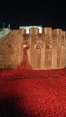 Tower of London Poppies at Night