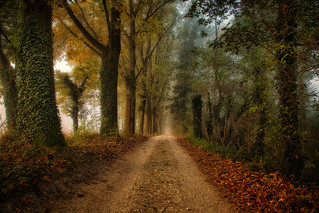 The path for autumn