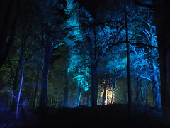Enchanted Forest (Rick Ellerman) Tags: light colour castle night scotland aberdeenshire creative picasa finepix sound fujifilm enchanted banchory crathes crathescastle enchantedcastle hs30 221114 hs30exr
