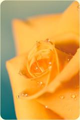 Flower (Dóra B.) Tags: flower colour canon photo nice pretty day colours perfume small charm akureyri dorabirgis