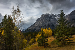 Unconditional love - International Mountain Day - December 11, 2014 (JoLoLog) Tags: trees canada mountains fall clouds kananaskis fallcolors joe alberta kananaskiscountry canadianrockies kcountry highway40 wedgepond therockymountains canonxsi internationalmountainday